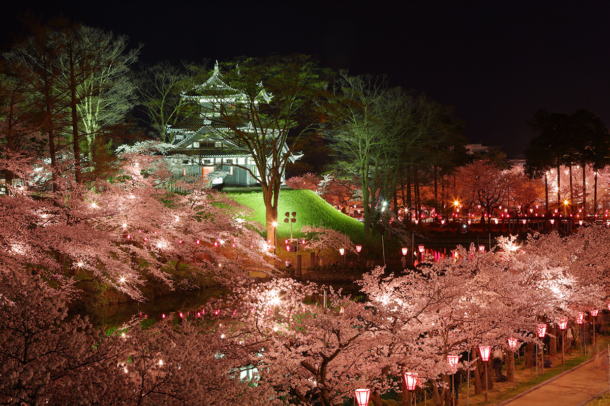 Takada Castle Cherry Blossom Display: One of the Three Great Night Cherry Blossom Viewings in Japan